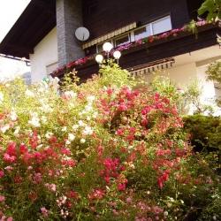Der Garten_1